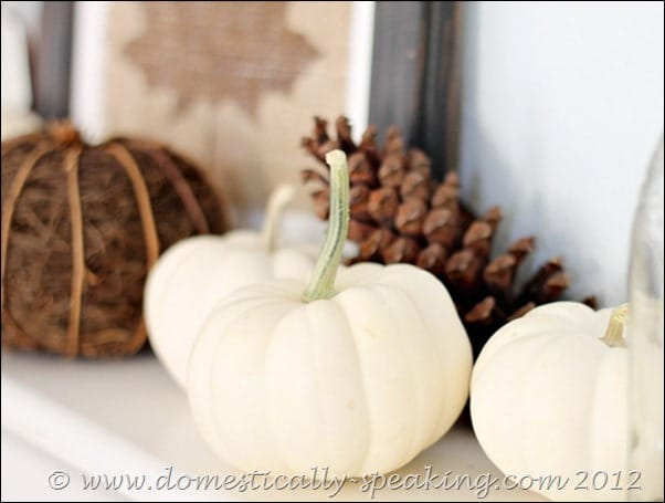 white pumpkins, fall, pinecones, acorns