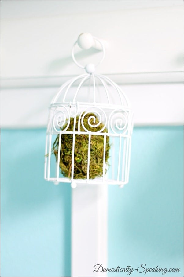 Moss egg in a bird cage