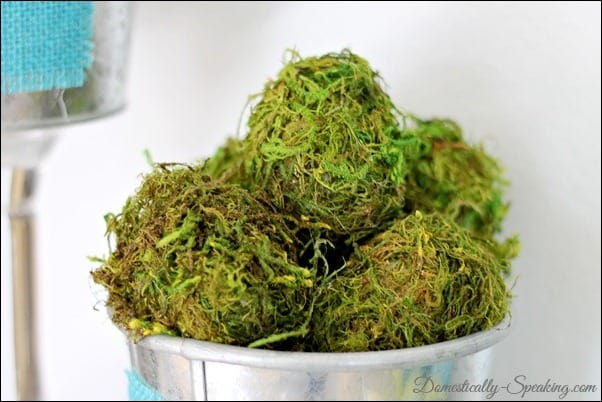 Collection of moss eggs in a galvanized bucket