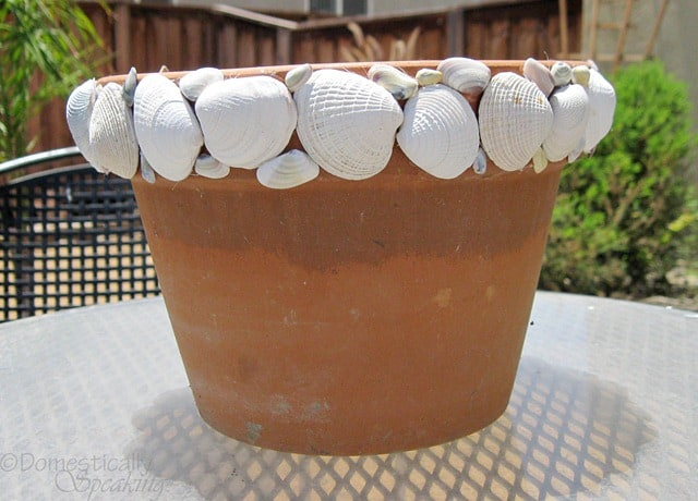 3rd Countdown to Summer ~ Shell Pots