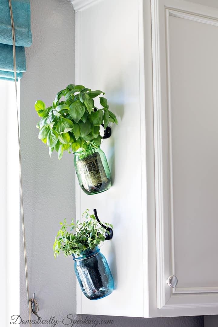 Hanging Fresh Herbs in Mason Jars  for a kitchen herb garden
