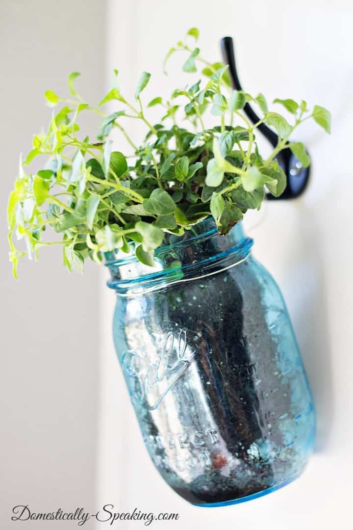 Hanging Fresh Herbs in a Vintage Blue Mason Jars