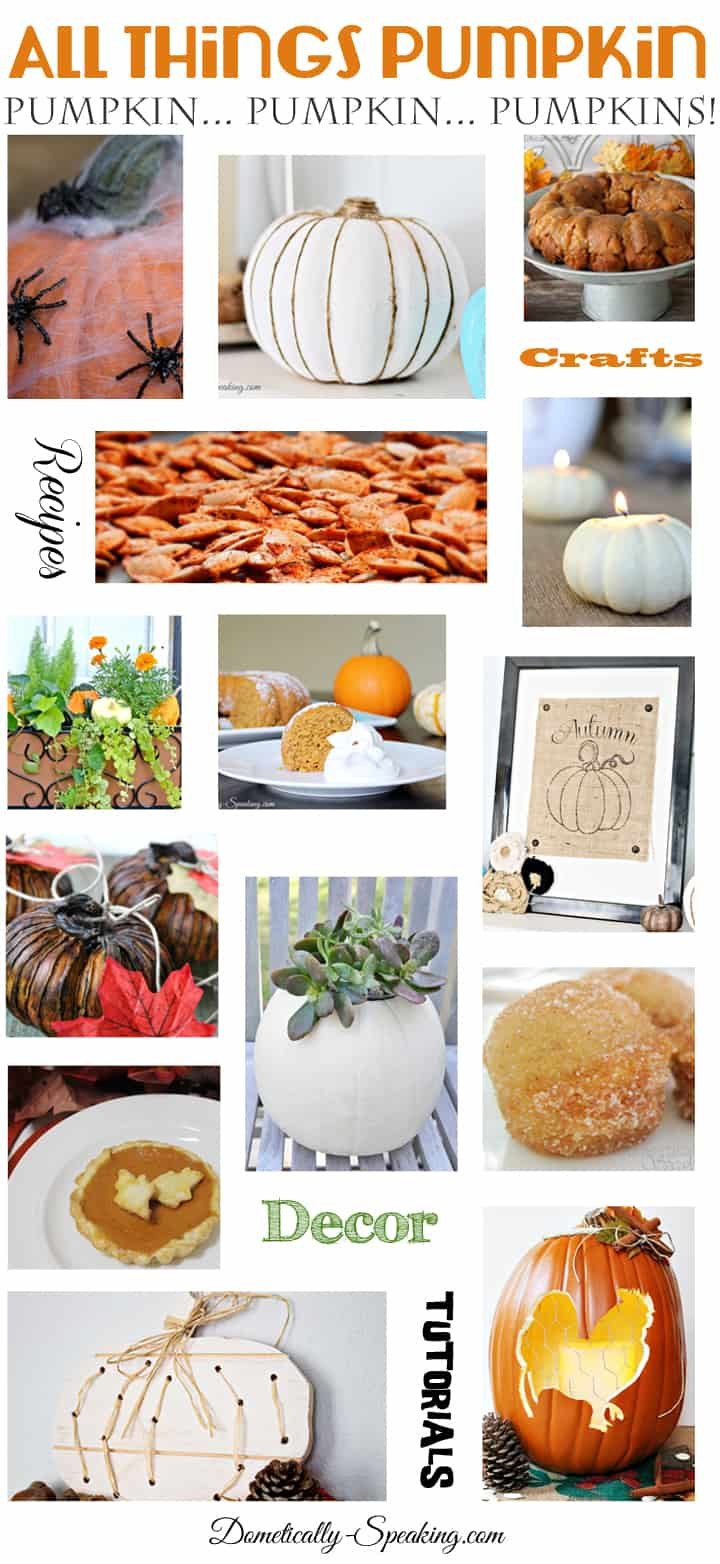All Things Pumpkins and Gourds