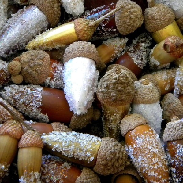 Acorns in Snow from Carolyns Homework