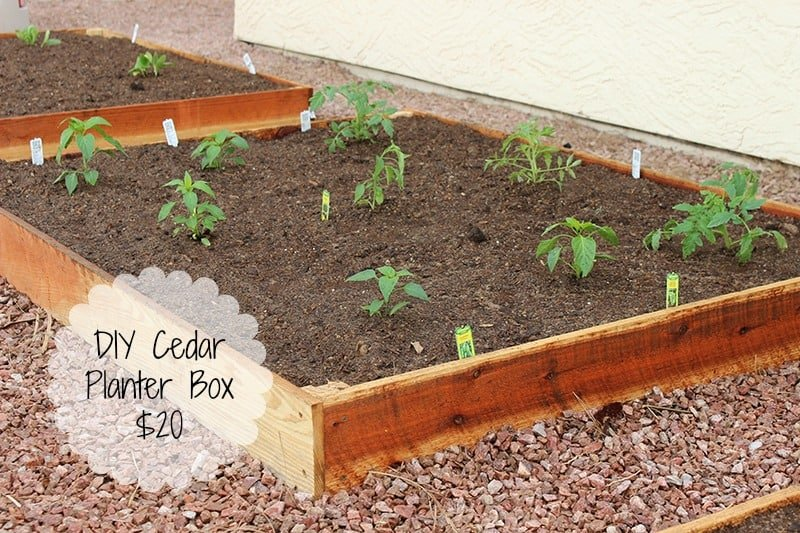 diy cedar planter box for 20