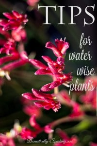 Tips for Water Wise Plants