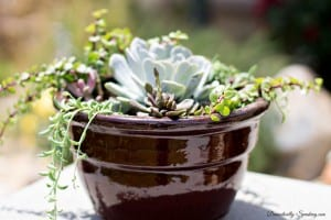 How to Create Your Own Succulent Planter 1