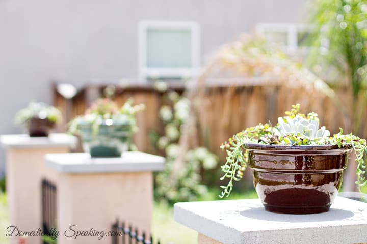 How to Create Your Own Succulent Planter 2