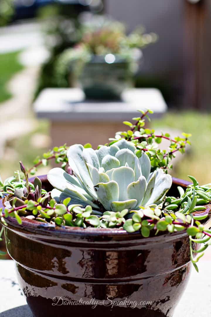 How to Create Your Own Succulent Planter
