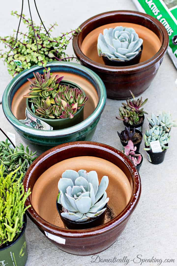 How to Create Your Own Succulent Planter 5
