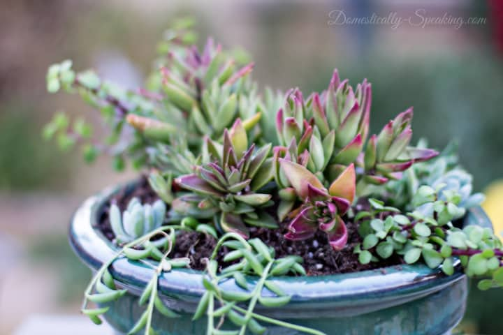 How to Create Your Own Succulent Planter 8