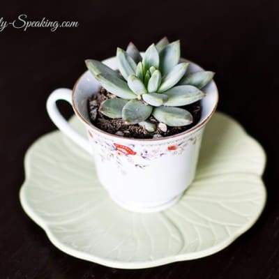 Teacup Succulents… An Easy Gift Idea