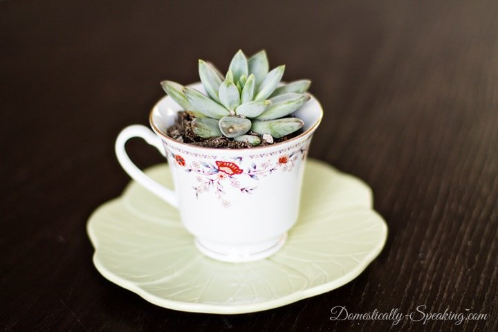 Thrift Store Teacup is perfect for a Succulent Gift Idea
