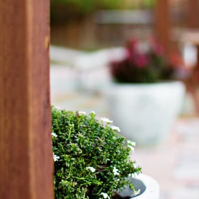 Define Your Patio with Monrovia Plants