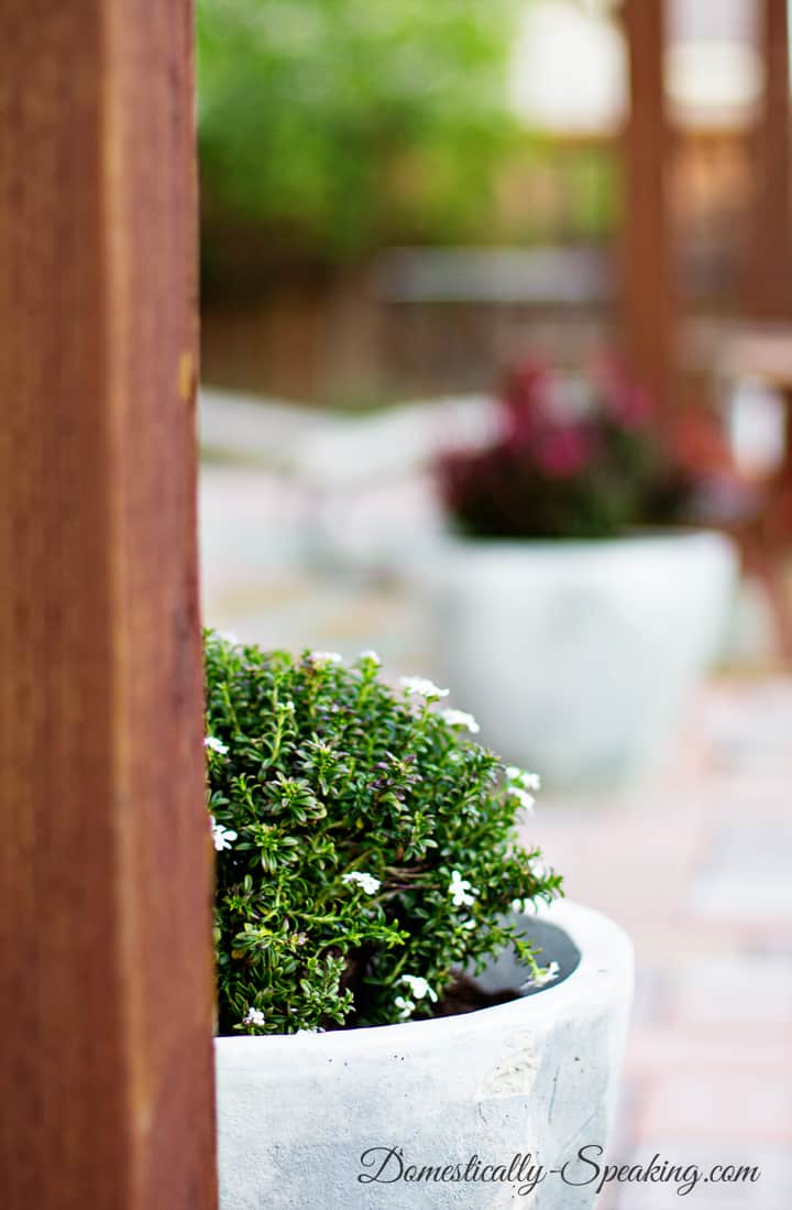 Define Your Patio With Plants 1
