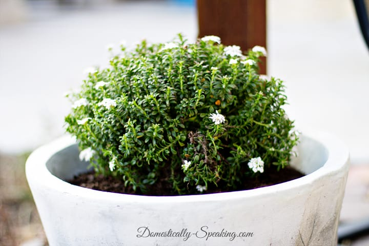 Define Your Patio with Plants 3