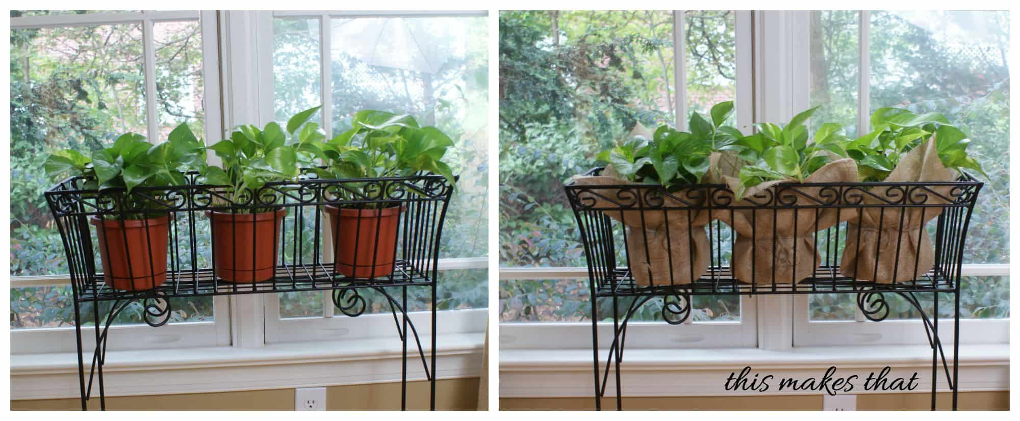 pothos before and after