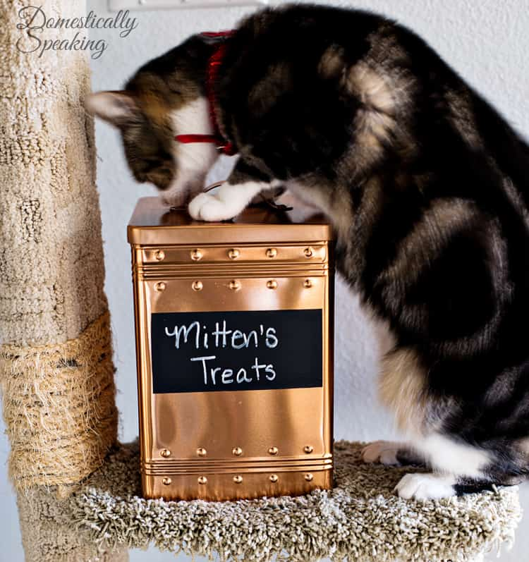Cat Pet Food Storage Bin from a Copper Cookie Tin