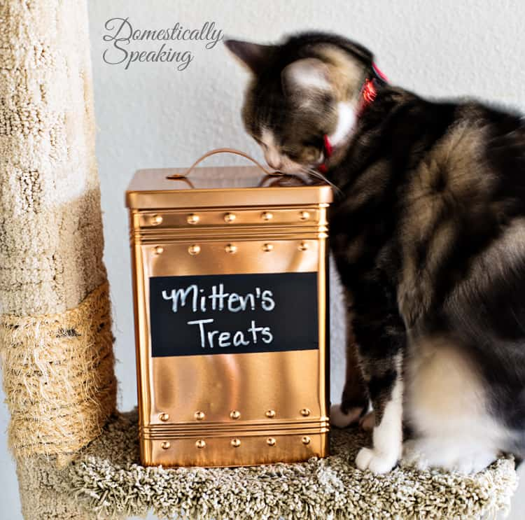 Pet Food Storage Bin for our Cat from a Thrift Store Cookie Tin