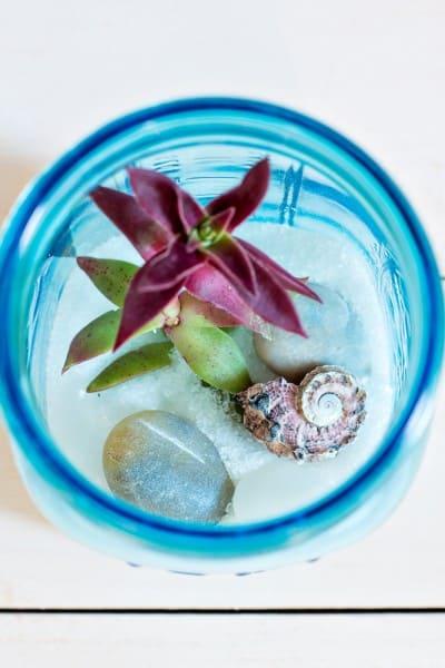 Mason Jar Succulent Terrarium