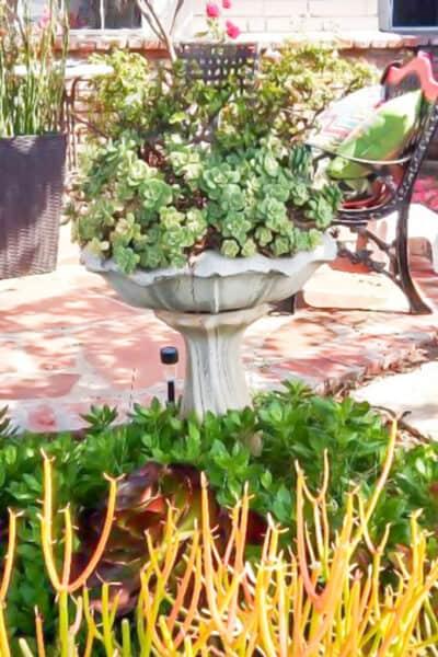 Turn an old bird bath into a Succulent Birdbath!