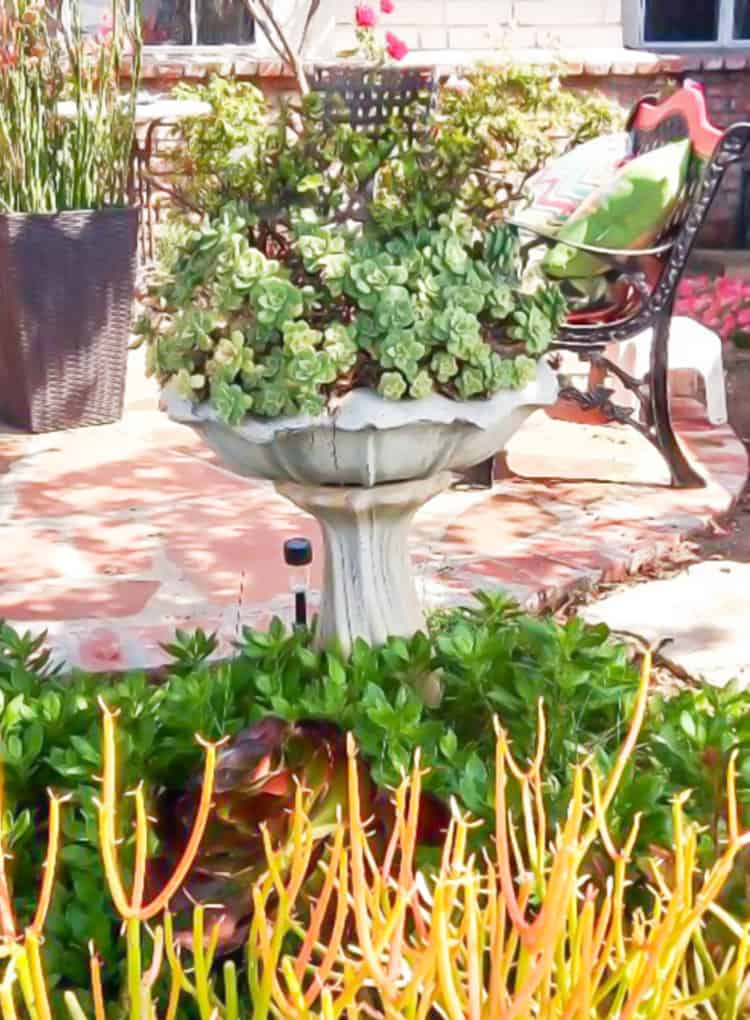Turn an old bird bath into a Succulent Birdbath!