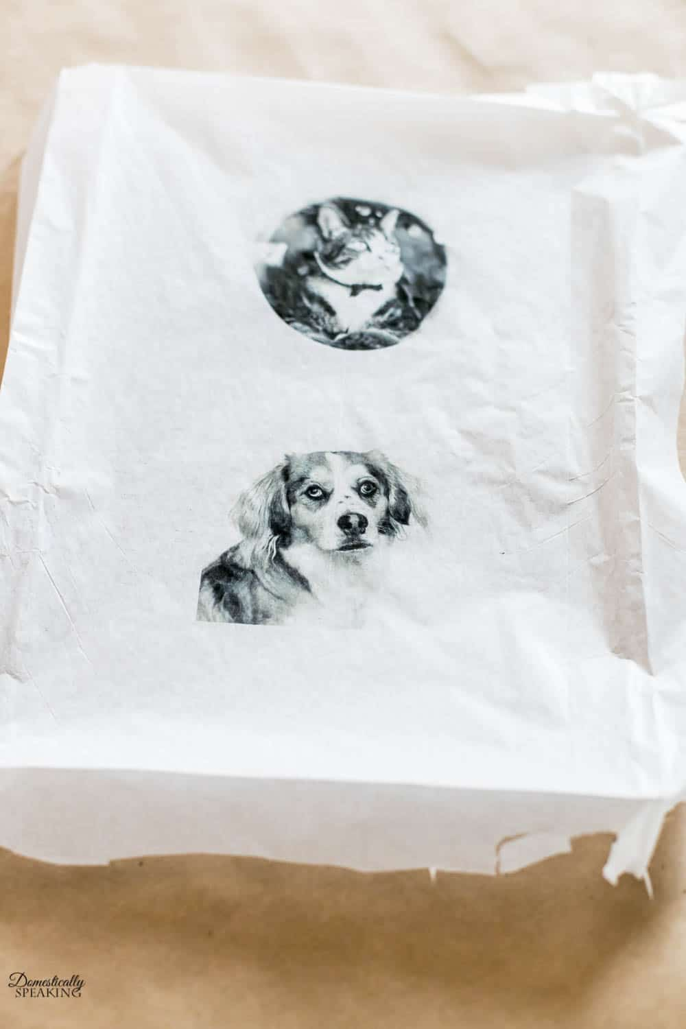 Dog and Cat photos printed on tissue paper.