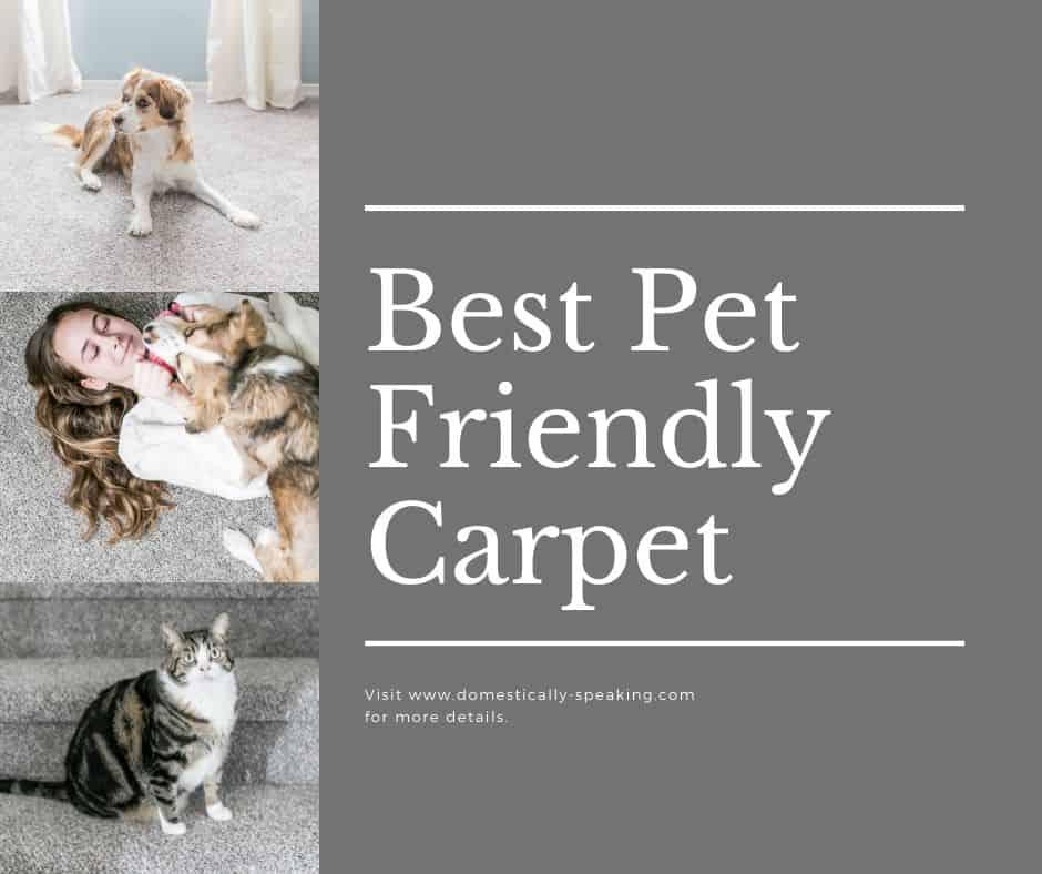 Best Pet Friendly Carpet