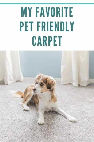 My favorite Pet Friendly Carpet