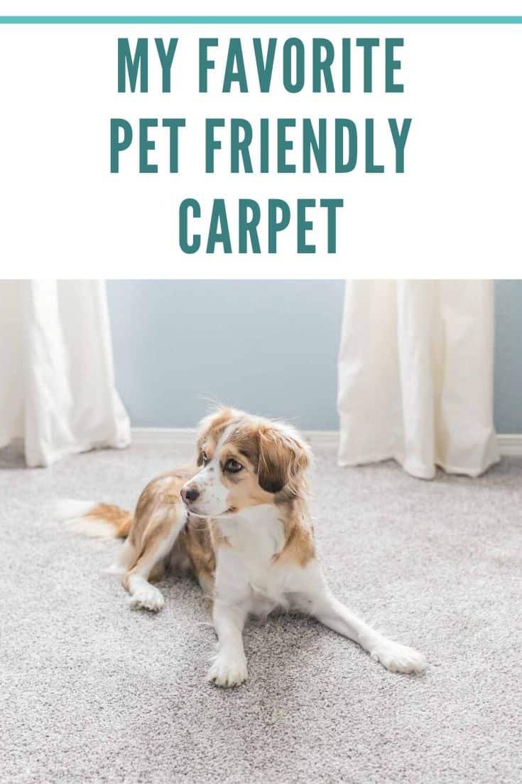 My favorite Pet Friendly Carpet